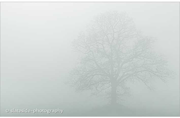 fog tree winter